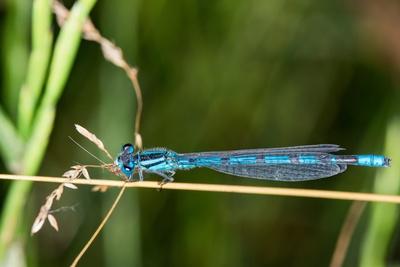 Blauer Flieger