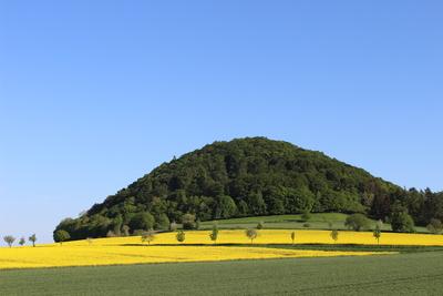 Rapsblüte-im-Chattengau