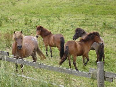 Pferde  im  Sauerland