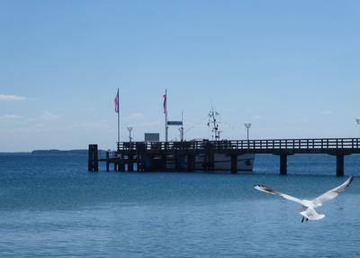 Seebrücke mit Möwe