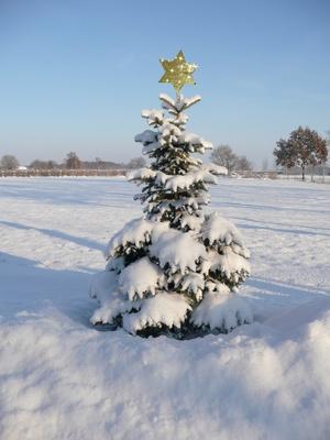 Winterlicher Weihnachtsbaum