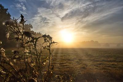 Sonnenaufgang in der Heide