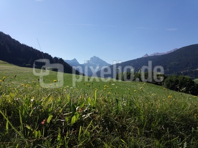 Bergwiese mit Dürrenstein