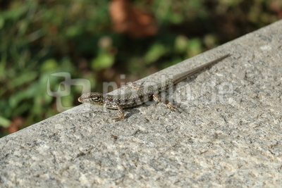 Mini-Krokodil
