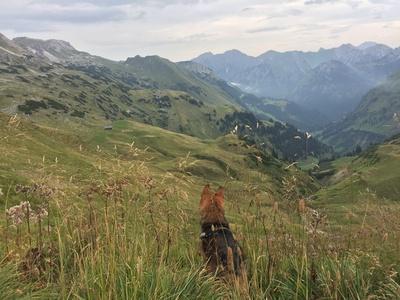 Hund Jolly genießt die Aussicht