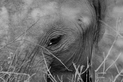 Das Auge des Elefanten