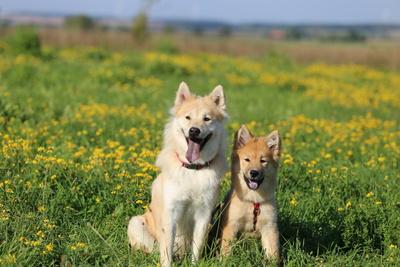 Mama und Tochter Eurasier