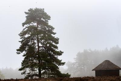 Nebel in der Lüneburger Heide