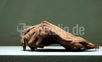 mumifizierte Hand