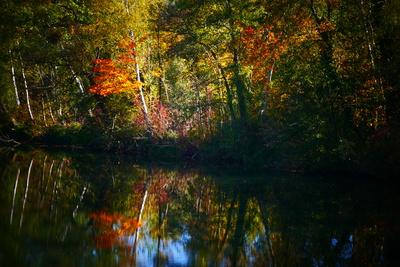 Herbst am Gewässer