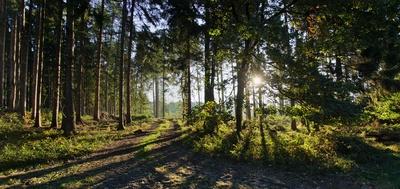 Morgenstille im Wald