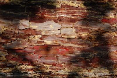 rote Baumrinde im Schattenspiel
