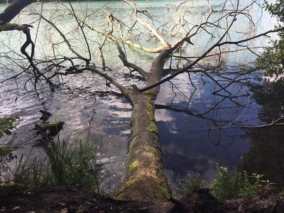 Umgestürzter Baum im Wasser