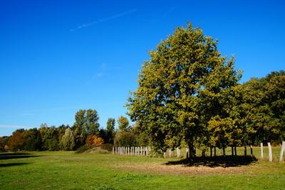 Herbst in Telgte