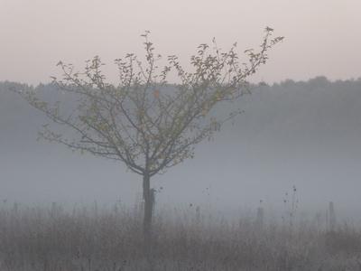 Nebel vor dem Wald