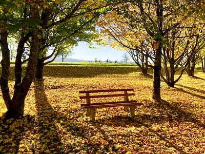 Herbstliche Ruhebank