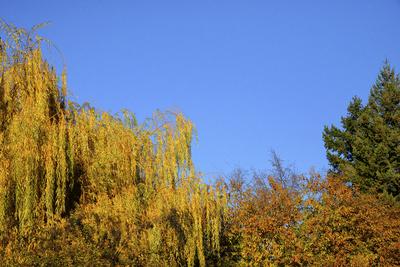 Herbstfarben, Bäume