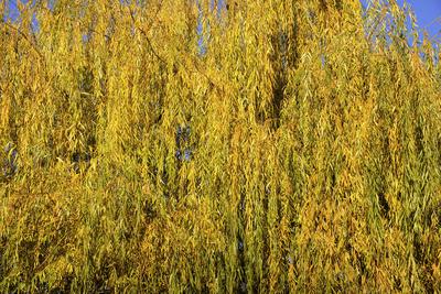 Herbstfarben, Baum