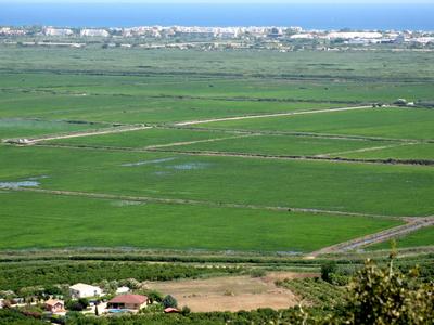 Reisfelder in Spanien