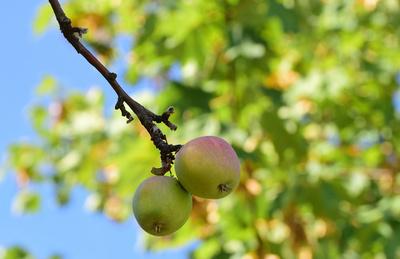 Herbstzeit - Erntezeit
