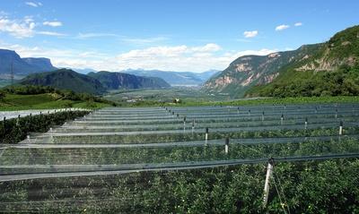 Hagelschutznetze beim Apfelanbau