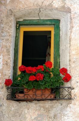altes Blumenfenster