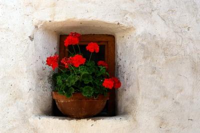 Blumenfenster in altem Gemäuer
