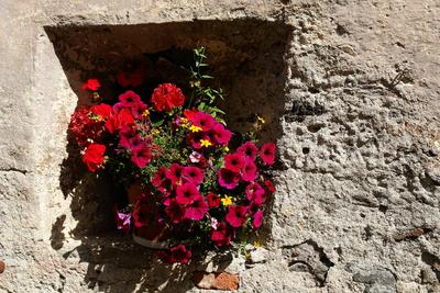 Blumenfenster in altem Gemäuer #2