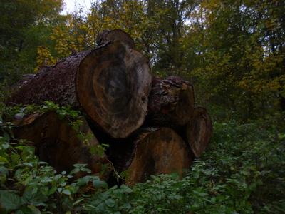Baumstämme gestapelt