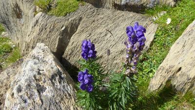 Blüten zwischen den Felsen