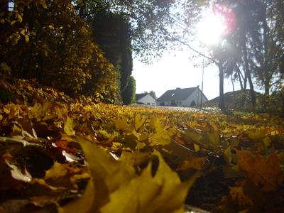 Wanderweg mit gelben Herbstblättern