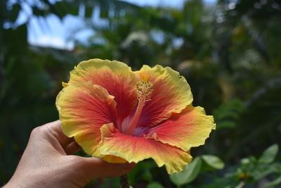 Tropische Blüte in der Hand