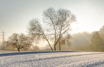 Der frühe Frost