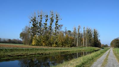 Bäume am Kanal