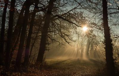 Sonnenaufgang am Waldrand...4...