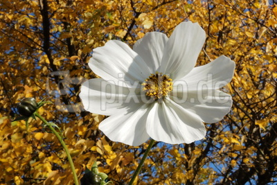herbstblüte 2