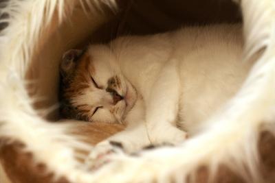 Kuschelig schlafen