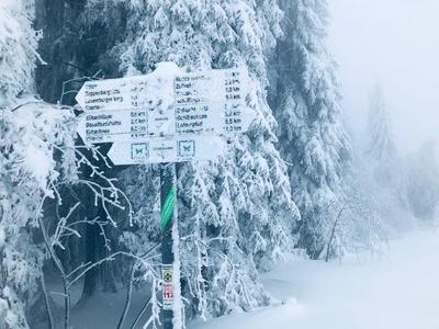 Wegweiser im eisigen Winter