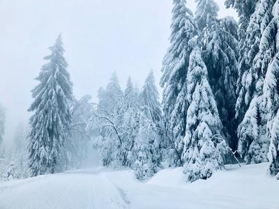 Winterwald unter Schneelast