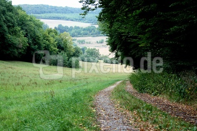 Ein schöner Feldweg