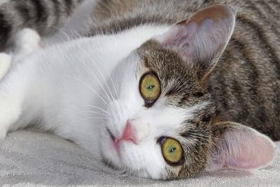 Katzenaugen 6