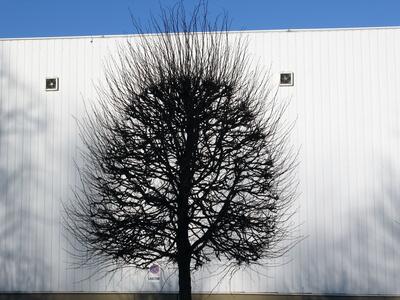Winterbaum-Licht und Schatten