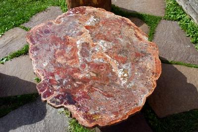 versteinerter Baum aus dem Trias