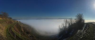 Morgennebel über Ihringen