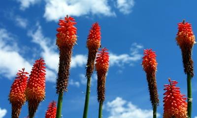 rote Blumenraketen himmelwärts