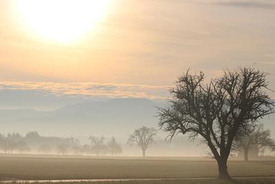 Sonnenaufgang Herbstwiesen