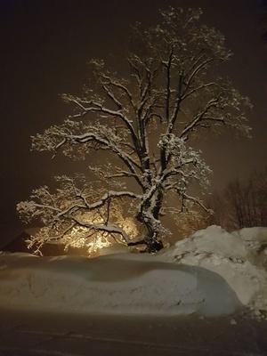Baum in der Wintersonne