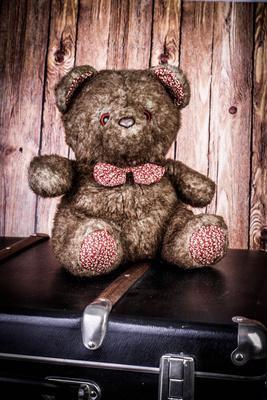 Teddy geht auf Reisen