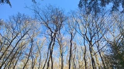 Wald in der Frühlingssonne