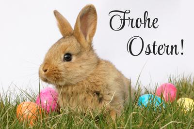 Frohe Ostern mit Osterhasen